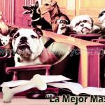 La Mejor Mascota | Cuentos de Reflexión | Masrelatosycuentos.com